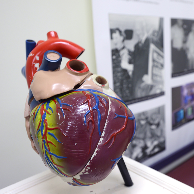 HEART THUMB | Augusta Museum of History
